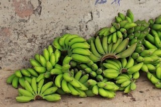 Bananas22-495x331