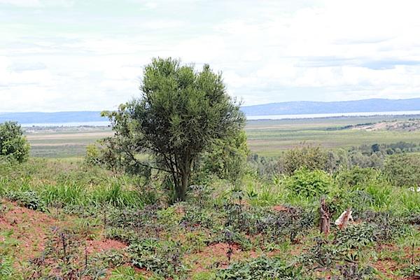 Rwandaland2